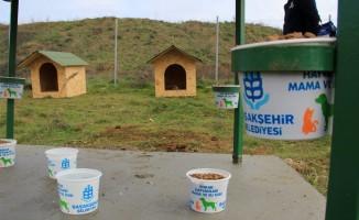 Başakşehir Belediyesi'nden sokak hayvanlarına sıcak yuva ve barınak noktası