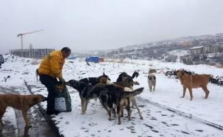 Çankaya Belediyesi sokak hayvanlarını unutmadı