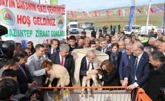 Gaziantep'te tarım ve hayvancılığa büyük destek