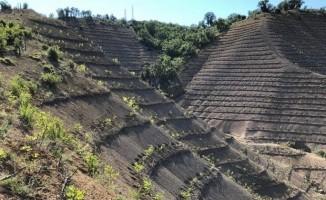Seben'de, 2018 yılında 400 bin fidan toprakla buluştu