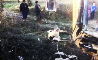 10 metrelik kuyudan buzağı kurtarma operasyonu
