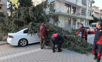 50 metrelik ağaç çocuk parkının üzerine devrildi