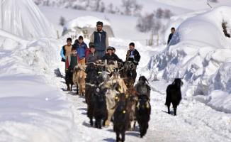 Bitlis'te zorlu besicilik