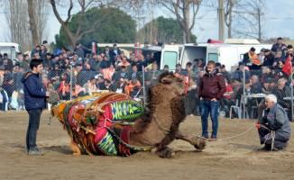 Çanakkale'de deve güreşi festivali