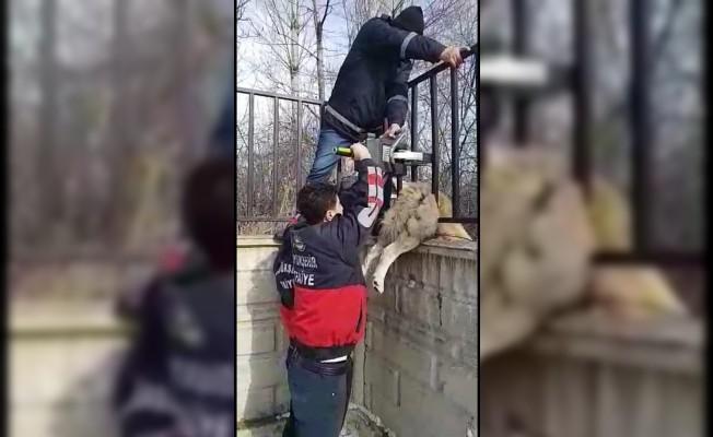 Demir parmaklıklarla sıkışan köpek, itfaiye tarafından kurtarıldı