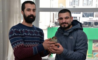 Donma tehlikesi geçiren kınalı keklik koruma altına alındı