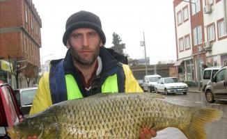 Fırat'ta yakalanan balıklar Arabanlıların yüzünü güldürdü