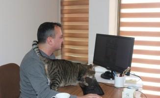 Gazetenin ofisini sokak kedilerine açtılar