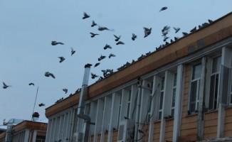 Güvercin dostu Belediye