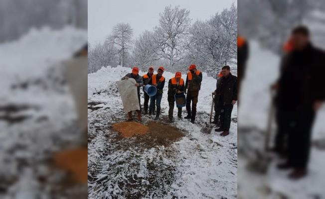 Lapseki'de yaban hayvanları için doğaya 450 kilogram yem döküldü