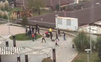 Liselilerin köpekli kavgası kameraya yansıdı