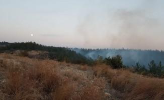 Osmaniye'de orman yangını