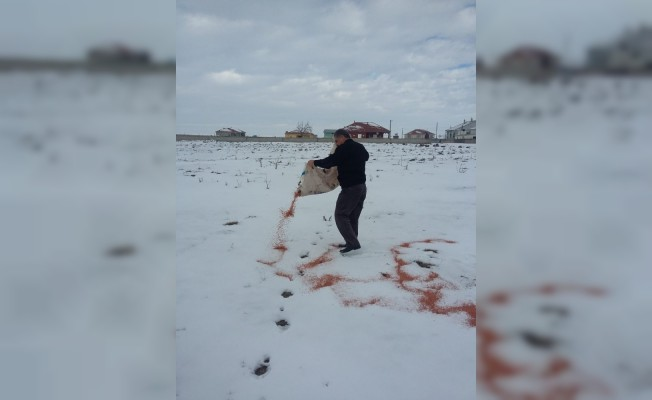 Soğuk havalarda yiyecek bulamayan yaban hayvanlarını unutmadı