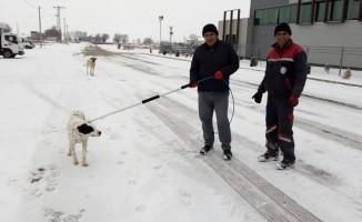 Sokak hayvanları tedavi için toplanıyor