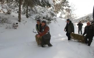 Tokat'ta yaban hayvanları için doğaya yem bırakıldı
