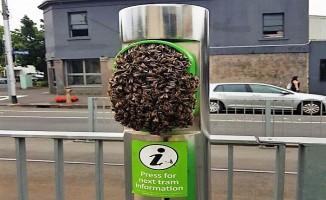 Tramvay durağına yuva yapan arılar seferleri aksattı