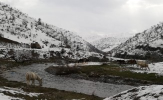 Yabani atlar donmaktan kurtarıldı