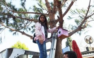Burhaniyeli öğrenciler ağaçlara kuş yuvaları astı