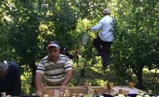 Cumhurbaşkanı Erdoğan'ın elma tanzimi müjdesi hayata geçiriliyor