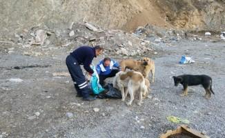 Hakkari Belediyesi ekipleri sokak hayvanlarını kendi elleriyle besliyor