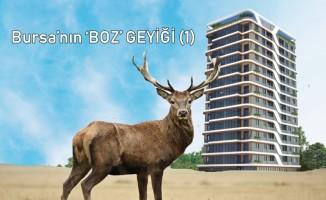 Muhammed Tayyar Türkeş yazdı : ''Bursa'nın 'BOZ' geyiği (1) ''