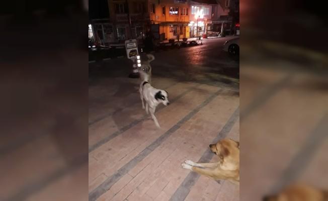 O ilçede başıboş köpek tedirginliği