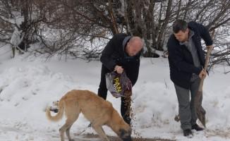 Ormana terk edilen köpeklere belediye eli