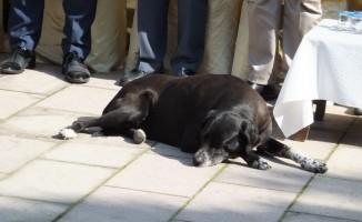 Sevimli köpek törene damgasını vurdu