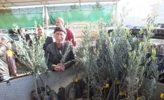 Silifke'de çiftçilere 10 bin zeytin fidanı dağıtıldı