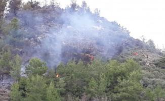 Yangın, muz seralarına ulaşmadan söndürüldü