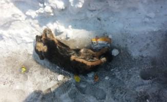 Yavru köpek durdurucu soğuklara dayanamadı