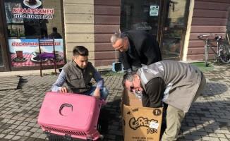 Zonguldak'ta kanadından vurulan doğan tedavi altına alındı