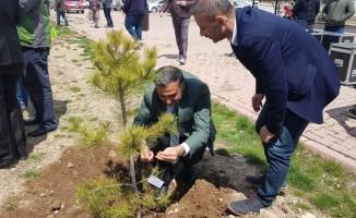 Develi'de Ağaç Dikme Etkinliği Düzenlendi