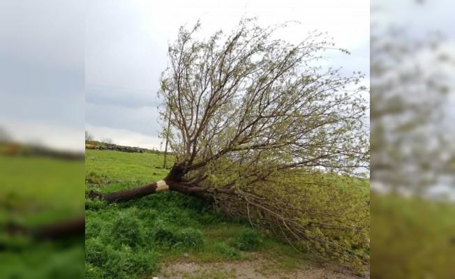 Hortum ağaçları, elektrik direklerini devirdi