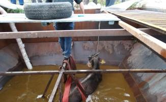 İçi su dolu siloya düşen daha belediye ekipleri tarafından kurtarıldı