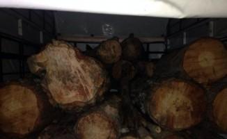Kahramaraş'ta kaçak ağaç kesimi operasyonu