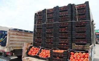Antalya Hal'inde domates 1 liraya kadar düştü