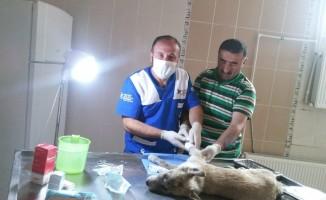 Hakkari'de 202 sokak hayvanına kuduz aşısı yaptırıldı