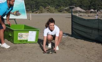 İngiltere güzellik kraliçesi kaplumbağayı denize bıraktı