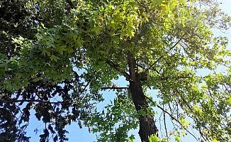 Ağaçta mahsur kalan kedinin yardımına itfaiye yetişti