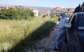Bilecik Belediyesi'nden 'Sarıkız Örümceği' için ilaçlama