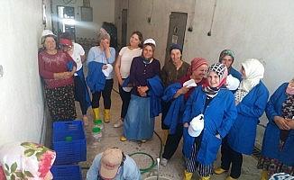 'Kadın Çiftçiler Tarımsal Yeniliklerle Buluşuyor' programı uygulamaya geçirildi