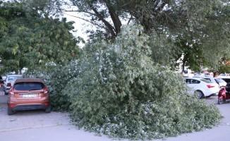 Kopan ağaç dalı üç araca zarar verdi