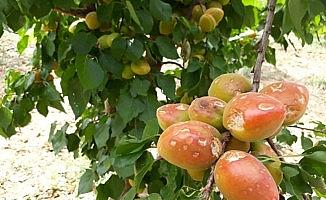Mersin'de dolu yağışı meyve ve sebze bahçelerine zarar verdi