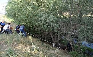 Sulama kanalına düşen ineğe kurtarma operasyonu