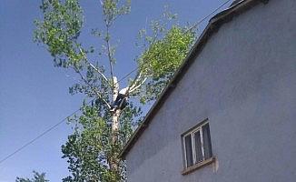 Testereyle bacağını kesen adam ağaçta mahsur kaldı