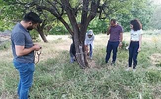 Bitkin halde bulunan yaban keçisi tedavisinin ardından doğaya bırakıldı