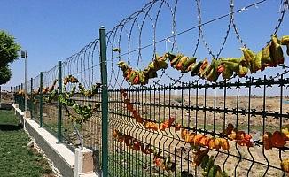 Diyarbakır'da kurutulan biberler renkli kareler oluşturdu