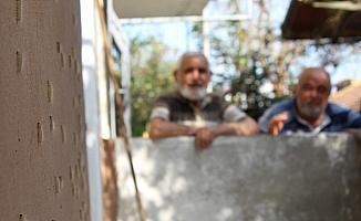 Evlerini ve ağaçları saran tırtıllarla mücadele ediyorlar