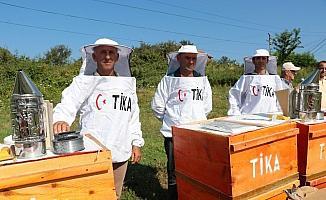TİKA'dan Arnavutluk'a arıcılık alanında destek